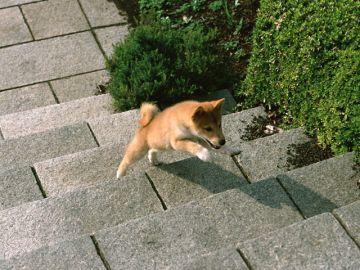 ペット葬祭センター福島/メモリアルパーク